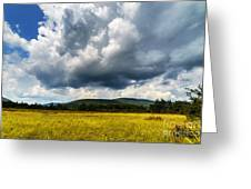 Cranberry Glades Botanical Area Greeting Card