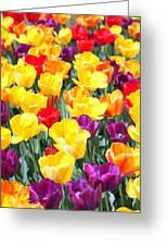 Amsterdam Tulips. Greeting Card