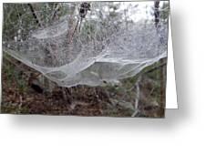 Australia - Concave Spider Web Greeting Card