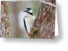 Great Spotted Woodpecker Greeting Card
