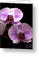 Orchids Kauai Greeting Card