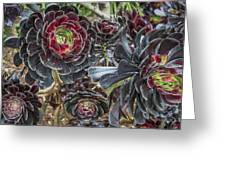 2543- Cactus Flower Greeting Card