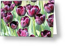 Amsterdam Tulips. Greeting Card