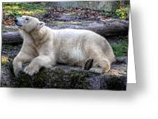 Hellabrunn Zoo - Munich, Germany Greeting Card