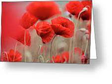 Summer Poppy Meadow Greeting Card