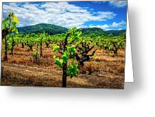 2638- Coffaro Vineyard Greeting Card