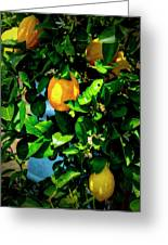 2644- Lemon Tree Greeting Card