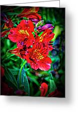 2647- Red Flowers Greeting Card