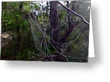 Australia - Uniquely Yours Spider Web Greeting Card