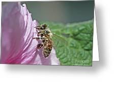 Honeybee Greeting Card