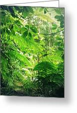 Jungle Leaves Greeting Card