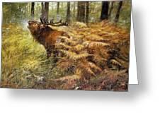 nature Rien Poortvliet Greeting Card