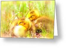 2736 - Canada Goose Greeting Card