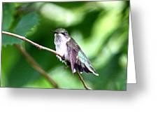 2757 -  Hummingbird Greeting Card