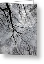 Trees Sky And Clouds Greeting Card