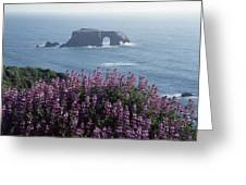 2a6101 Arched Rock And Blue Pod Lupine Ca Greeting Card