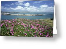 2a6106 Ice Plant Doran Beach Ca Greeting Card