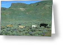 2da5946-dc Cattle On Steens Mountain Greeting Card