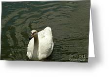 . Greeting Card