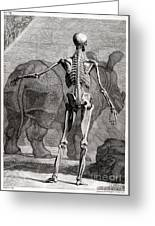 18th Century Anatomical Engraving Greeting Card