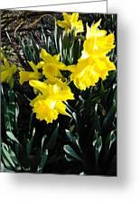 A Daffodil Exhibit Greeting Card