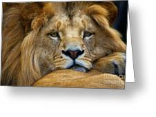 Angolian Lion Greeting Card
