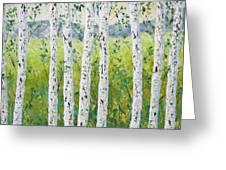 Aspen Trees Colorado Greeting Card