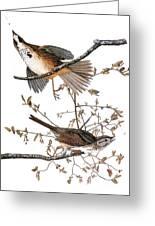 Audubon: Sparrow, (1827-38) Greeting Card