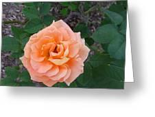 Australia - Orange Rose Flower Greeting Card
