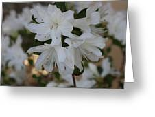 Azalea Flowers Greeting Card