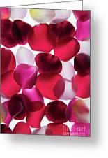 Back Lit Flower Petals 1 Greeting Card