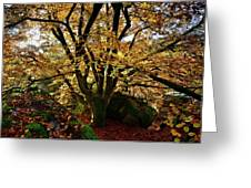 Beech Tree Greeting Card