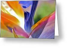 3 Bird Of Paradise Macro Greeting Card