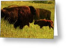 Bisons Greeting Card