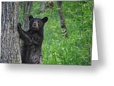 Black Bear Yearling Greeting Card
