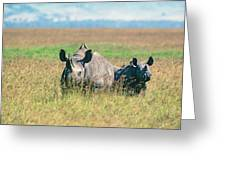 Black Rhinocerous Greeting Card