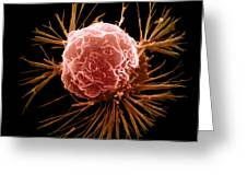 Breast Cancer Cell Greeting Card