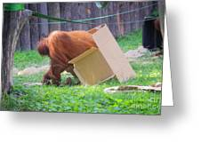 Budapest Zoo Greeting Card