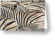 Burchells Zebras Equus Quagga Greeting Card