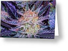 Cannabis Macro Greeting Card