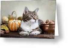 Cat And Pumpkins Greeting Card