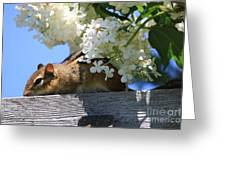 Chipmunk Chillin' On The Railin' Greeting Card