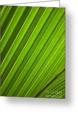 Coconut Palm Leaf Greeting Card