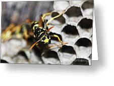 Common Wasp Vespula Vulgaris Greeting Card