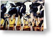 3-cows Greeting Card