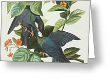 Crowned Pigeon Greeting Card