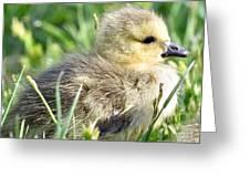 Cute Baby Goose Greeting Card