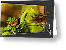 3-d Dragonfly Greeting Card