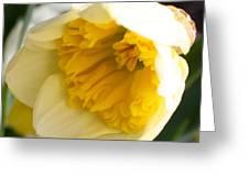 Daffodil Days Greeting Card