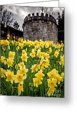 Daffodils And Bar Walls, York, Uk. Greeting Card